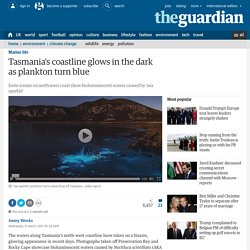 *****Bioluminescence: Tasmania's coastline glows in the dark as plankton turn blue