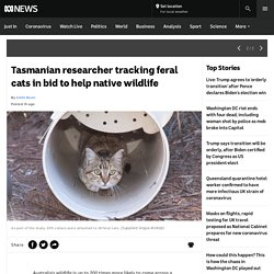 Tasmanian researcher tracking feral cats in bid to help native wildlife
