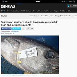 Tasmanian southern bluefin tuna makes a splash in high-end sushi restaurants - ABC Rural - ABC News