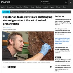 Vegetarian taxidermists are challenging stereotypes about the art of animal preservation - ABC News