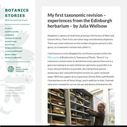 My first taxonomic revision – experiences from the Edinburgh herbarium – by Julia Wellsow