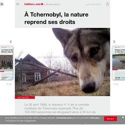 À Tchernobyl, la nature reprend ses droits - Edition du soir Ouest France - 07/04/2016