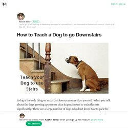 How to Teach a Dog to go Downstairs – Rachel Willy – Medium