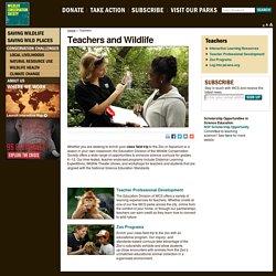 Teachers and Wildlife