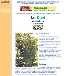 Fiche technique du Kiwi - Actinidia - sur www.moambe.com