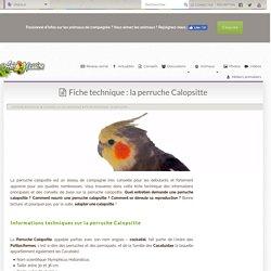 Fiche technique : la perruche Calopsitte