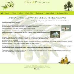 OLIVIER DE PROVENCE - Le piégeage est le procédé qui donne les meilleurs résultats.