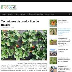 TRANSFERT DE TECHNOLOGIE EN AGRICULTURE (Maroc) - JUILLET 2014 - Techniques de production du fraisier: résultats d'enquêtes au Loukkos