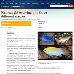 Fish caught evolving into three different species - Technology & science - Science - DiscoveryNews.com