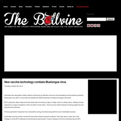 BOVINE VETERINARIAN 08/10/14 New vaccine technology combats Bluetongue virus (issu de biologie synthétique)