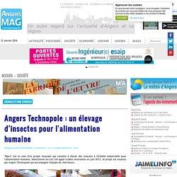 Angers Technopole : un élevage d'insectes pour l'alimentation humaine
