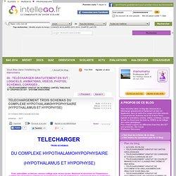 TELECHARGEMENT TROIS SCHEMAS DU COMPLEXE HYPOTHALAMOHYPOPHYSAIRE (HYPOTHALAMUS ET HYPOPHYSE)