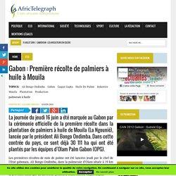 Gabon : Première récolte de palmiers à huile à Mouila — Afric Telegraph - Toute l'actualité africaine