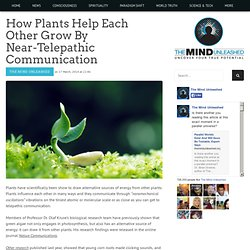 How Plants Help Each Other Grow By Near-Telepathic Communication