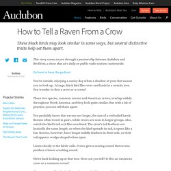 How to Tell a Raven From a Crow