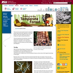 Temperate Forest Trees and Plants