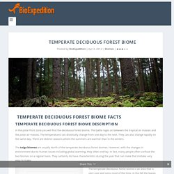 Temperate Deciduous Forest Biome - Animal Facts and Information