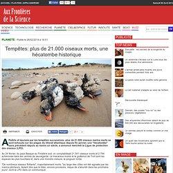 Tempêtes: plus de 21.000 oiseaux morts, une hécatombe historique