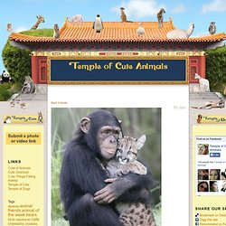 Temple of Cute Animals - Funny Animal Photos, Videos, and Gifs - Part 3