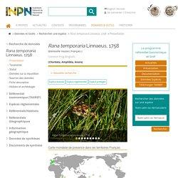Rana temporaria-Grenouille rousse-Présentation