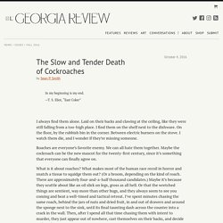 The Slow and Tender Death of Cockroaches