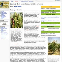 Le maïs, de la téosinte aux variétés hybrides - Les Mots de l'agronomie