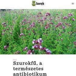 Szurokfű, a természetes antibiotikum - Berek