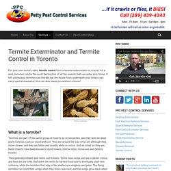 Termite Exterminator and Termite Control in Toronto