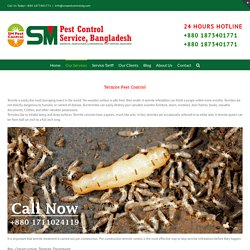 Most Effective Pest Control Services in Bangladesh