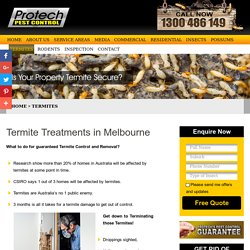 End Your Termite Nightmare with our Termite Control Solutions