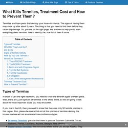 What Kills Termites, Treatment Cost and How to Prevent Them?