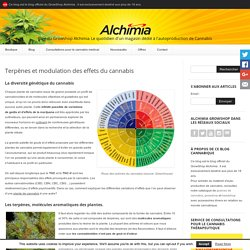 Terpènes et modulation des effets du cannabis - Blog du Growshop Alchimia