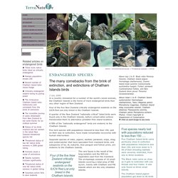 Chatham Island birds