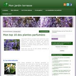 Mon jardin terrasse » Mon top 10 des plantes parfumées