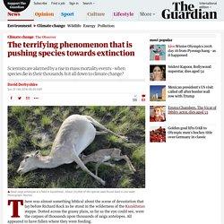 The terrifying phenomenon that is pushing species towards extinction