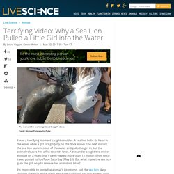 Terrifying Video: Why a Sea Lion Pulled a Little Girl into the Water