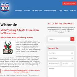 Mold Inspection Wisconsin