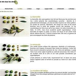 la tête dans les olives