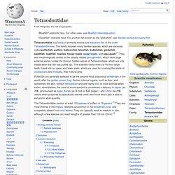 Tetraodontidae