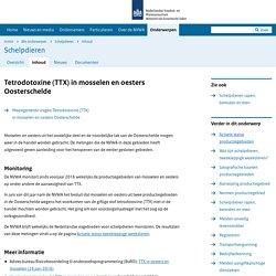 NVWA_NL 09/02/16 Tetrodotoxine (TTX) in mosselen en oesters.