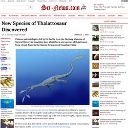 New Species of Thalattosaur Discovered