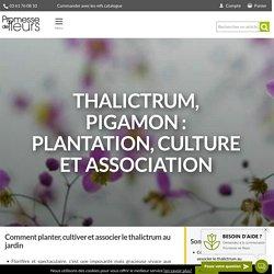 Thalictrum ou Pigamon : planter, cultiver et associer au jardin