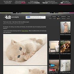 That's sooo Cute! - Baekdal.com