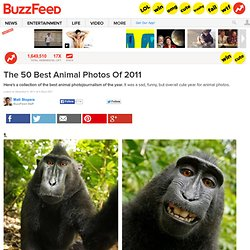 50 Incredible Photos Of Animals From 2011 - StumbleUpon