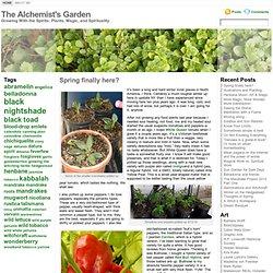 The Alchemist's Garden