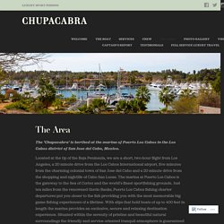 The Area – Chupacabra
