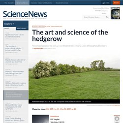 The art and science of the hedgerow