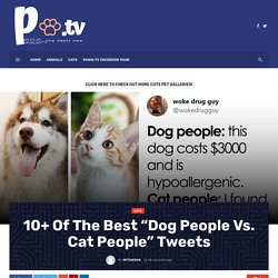 """10+ Of The Best """"Dog People Vs. Cat People"""" Tweets - PawwTV"""