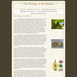 The Biology of the Banana