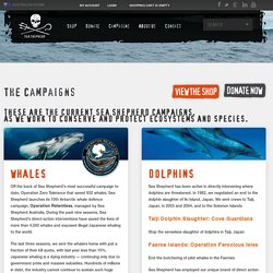The Campaigns, Sea Shepherd Campaigns